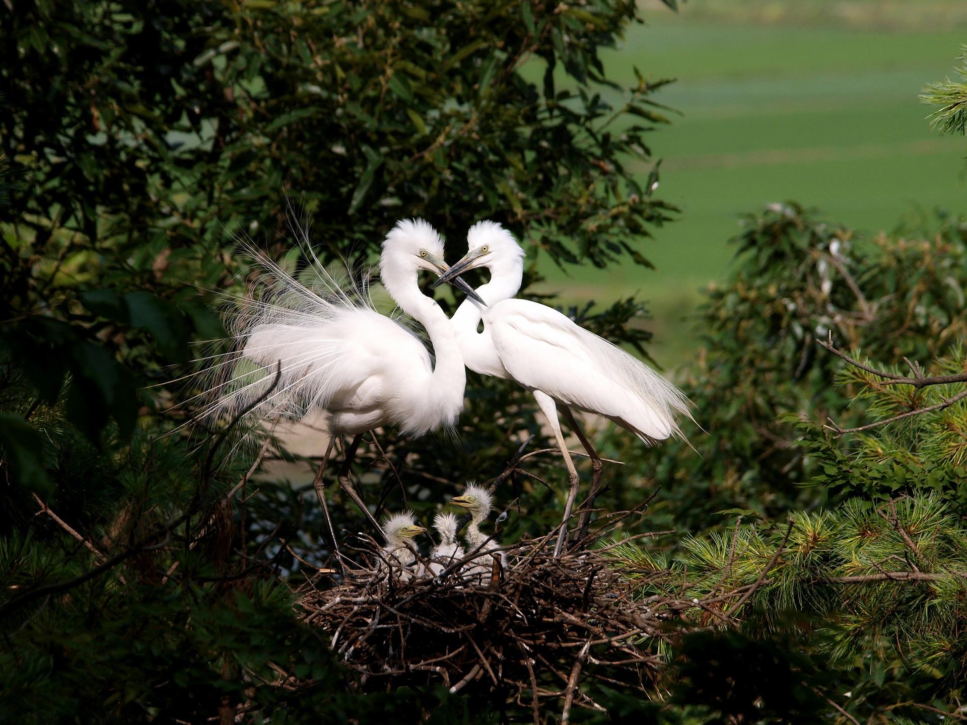 共通の時間を過ごす夫婦鳥