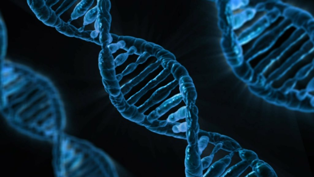 Shivom(OMX)が提供する遺伝子解析サービス