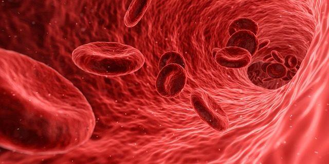 血管の中を流れる赤血球
